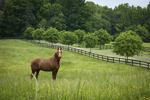 VA Horse Farms for Sale